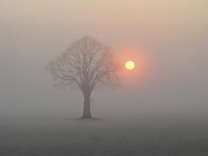 silence fog